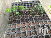 Fruit Tree Seedlings Available | Feeds, Supplements & Seeds for sale in Nairobi, Ruai
