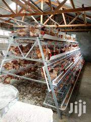 Poultry Cages For 128 Birds   Farm Machinery & Equipment for sale in Nairobi, Imara Daima