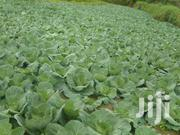 Cabbages For Sale Whole Sale Prices | Meals & Drinks for sale in Elgeyo-Marakwet, Kaptarakwa