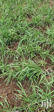 An Acre Of Boma Rhodes Seeds | Feeds, Supplements & Seeds for sale in Kericho, Kabianga