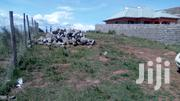 1⁄8 Plot on Sale in Ngong Kibiko | Land & Plots For Sale for sale in Kajiado, Ngong