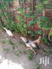 Chicken Kuchi Female | Livestock & Poultry for sale in Mombasa, Shimanzi/Ganjoni