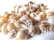 Assorted Mixed Sea Shells For Aquarium Or Flower Veses | Fish for sale in Nairobi, Nairobi Central