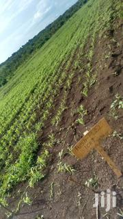 20 Acre Farm Land For Sale | Land & Plots For Sale for sale in Homa Bay, Kasgunga