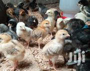 3 Weeks Healthy Improved Kienyeji Chicks. | Livestock & Poultry for sale in Nairobi, Komarock