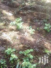 A Quarter Acre | Land & Plots For Sale for sale in Meru, Ntima West