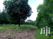 Half Acre Plot For Sale In Kisumu Ojola | Land & Plots For Sale for sale in Kisumu, Central Kisumu