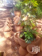 Potted Plants For Hire | Landscaping & Gardening Services for sale in Nairobi, Karen