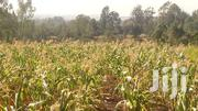 CA086 – Ngong Matasia Merisho 2-4 Acres At 10m | Land & Plots For Sale for sale in Kajiado, Olkeri