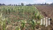 1 Acre Land on Sale Between Fly Over and Naivasha | Land & Plots For Sale for sale in Nakuru, Naivasha East
