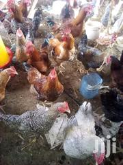 Improved Kienyenji Chicken For Sale | Livestock & Poultry for sale in Nairobi, Kasarani