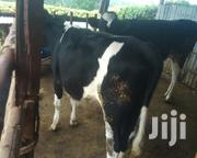 Cow For Sale | Livestock & Poultry for sale in Kiambu, Githunguri