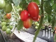 Tomatoes   Meals & Drinks for sale in Nairobi, Nairobi Central