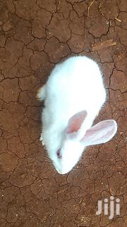 Rabbits.Either As Pets | Other Animals for sale in Kiambu, Thika