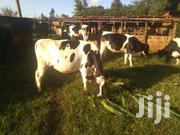 Cow For Sale | Livestock & Poultry for sale in Kiambu, Ndeiya