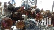 Kienyeji And Improved Meat And Rearing Chickens | Livestock & Poultry for sale in Nairobi, Kariobangi North