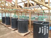 Fish Hatchery Design And Construction | Building & Trades Services for sale in Kiambu, Gatuanyaga