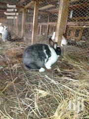 Rabbit Farming Thika | Other Animals for sale in Kiambu, Thika