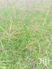 Pure Boma Rhodes Hay Grass For Sale | Feeds, Supplements & Seeds for sale in Nakuru, Mai Mahiu