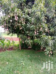 Ready To Process | Land & Plots For Sale for sale in Embu, Kyeni South