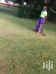 Dog Trainer | Pet Services for sale in Trans-Nzoia, Sirende