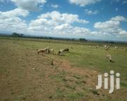 50 Acres In Rumuruti | Land & Plots For Sale for sale in Laikipia, Sosian
