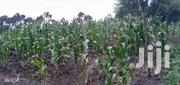 5 Acres in Muhotetu | Land & Plots For Sale for sale in Laikipia, Marmanet