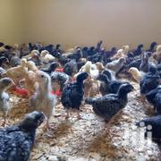 Improved Kienyeji Chicks | Livestock & Poultry for sale in Nakuru, Nakuru East