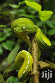 Snakes Control Service | Other Services for sale in Kisumu, Central Kisumu