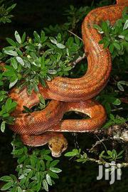 Snake Control Services | Pet Services for sale in Nairobi, Nairobi Central