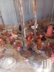 Cork Selling | Livestock & Poultry for sale in Kajiado, Ngong