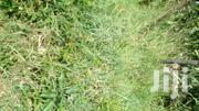Selling A Prime Piece Of Land 1/4 | Land & Plots For Sale for sale in Kirinyaga, Kerugoya