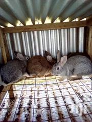 Meat And Breeding Rabbits | Livestock & Poultry for sale in Vihiga, Central Maragoli