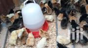 4 Days Old Healthy Improved Kienyeji Chicks. | Livestock & Poultry for sale in Nairobi, Komarock