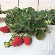 Organic Strawberries | Meals & Drinks for sale in Nairobi, Kasarani