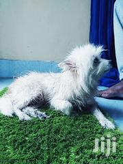 Dogs Urgently On Sale | Dogs & Puppies for sale in Nairobi, Ruai