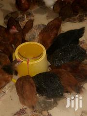 Chicken And Chicks For Sale | Livestock & Poultry for sale in Nairobi, Embakasi