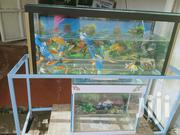 We Sell Aquariums And Wall Bubbles. | Fish for sale in Nairobi, Roysambu