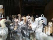 Kienyeji Chicks | Livestock & Poultry for sale in Nairobi, Komarock