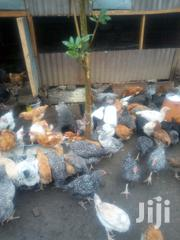 Vaccinated Improved Kienyeji Chicks | Livestock & Poultry for sale in Nairobi, Kayole Central
