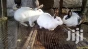 Newzealand White Rabbits | Livestock & Poultry for sale in Nakuru, Nakuru East