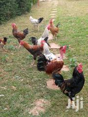 Pure Kienyeji Chicken And Eggs For Sale | Livestock & Poultry for sale in Kiambu, Ruiru
