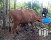 Dairy Animal | Livestock & Poultry for sale in Kakamega, Isukha Central