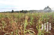Plot Loctaed at Muthure,Measured in Feet 50*100 Suitable for Flat | Land & Plots For Sale for sale in Kiambu, Kabete