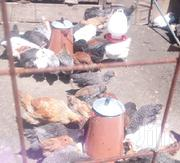 3 Months Old Healthy Improved Kienyeji Chicks | Livestock & Poultry for sale in Nairobi, Komarock