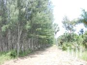 11 Acres Of Mature Casuarina Plantation In Ramisi, Kwale | Land & Plots For Sale for sale in Kwale, Ramisi