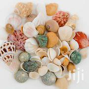 Mixed Shell, For Aquarium And Other Decoration | Fish for sale in Nairobi, Nairobi Central