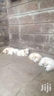 Japanese Spitz . | Dogs & Puppies for sale in Nairobi, Komarock