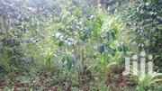Nyeri Kagwathi 2 Acres | Land & Plots For Sale for sale in Nyeri, Kamakwa/Mukaro