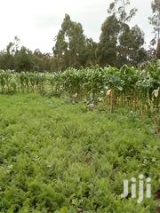 30 Acres Mwendandu, South Kinangop | Land & Plots For Sale for sale in Nyandarua, Magumu